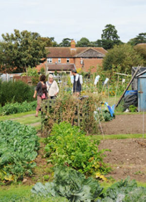 Stone's Close Allotments